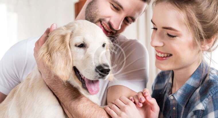 Are These Pet Poisons In Your Home?